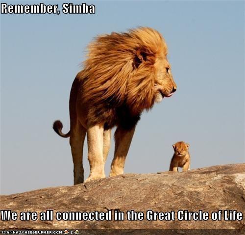 Circle of Life Lion King